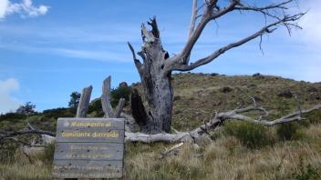 Monumento ao caminhante distraído: árvore queimada por fogo de cigarro