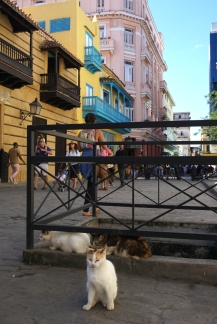 Calle Obispo, em Habana Vieja