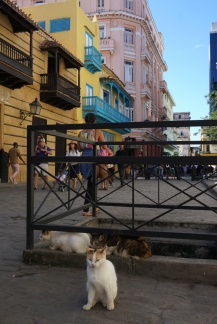 NossoMapaMundi_GatosnaObispo_Havana_Cuba